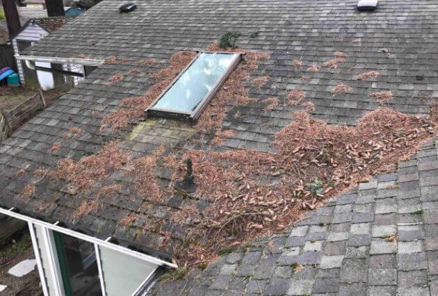 Debris on Roof